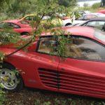Un cimetière de Ferrari ! Les chevaux se cachent pour mourir... 24