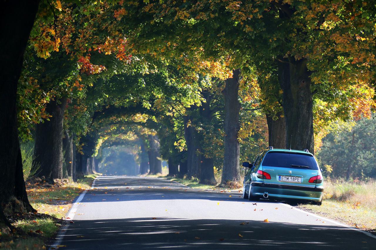 Peugeot 406 Break - Du 19 et de l'air ! 3